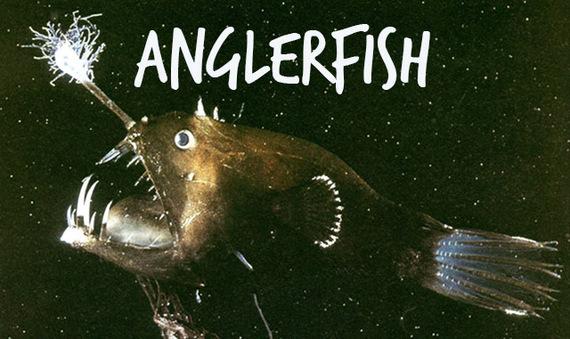 2014-09-12-anglerfish.jpg