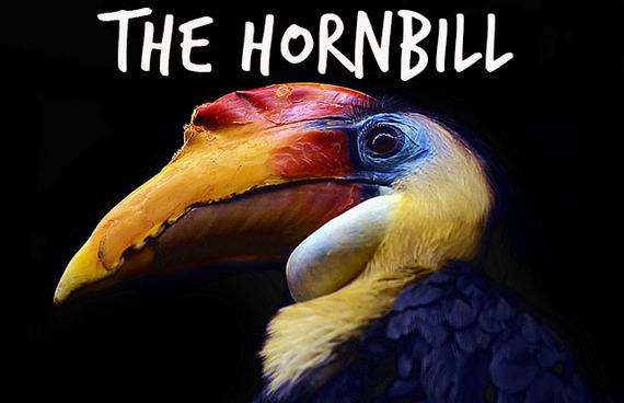 2014-09-12-hornbill.jpg