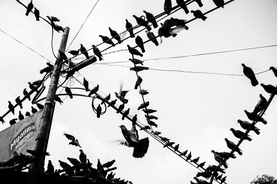 2014-09-13-Birds.jpg