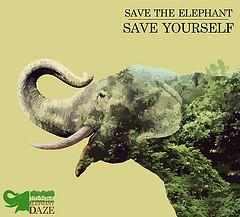 2014-09-15-ElephantDaze.jpg
