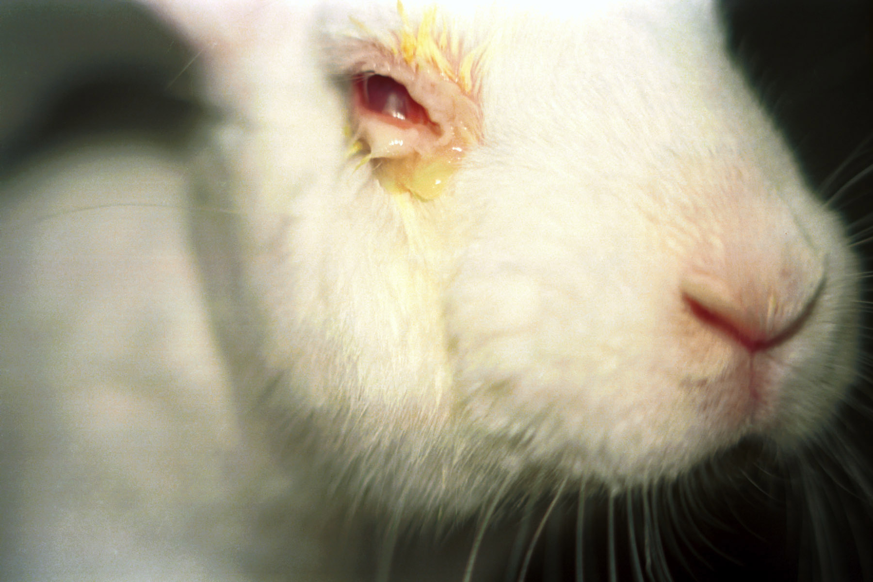 animal testing cosmetics testing Drugs and cosmetics rules (second amendment), 2014 has banned animal testing of cosmetics and will develop non-animal methods to test future cosmetic products.