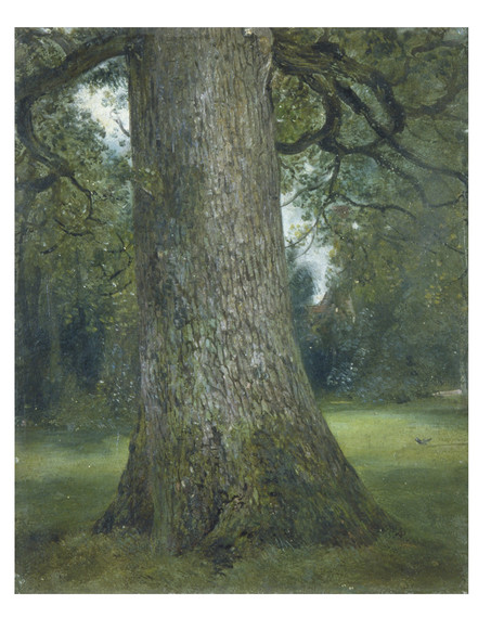 2014-09-17-9.Study_of_the_Truck_of_an_Elm_Tree_c.1824_c_Victoria_and_Albert_Museum_London.jpg