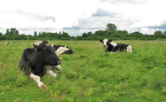 2014-09-17-cows.jpg