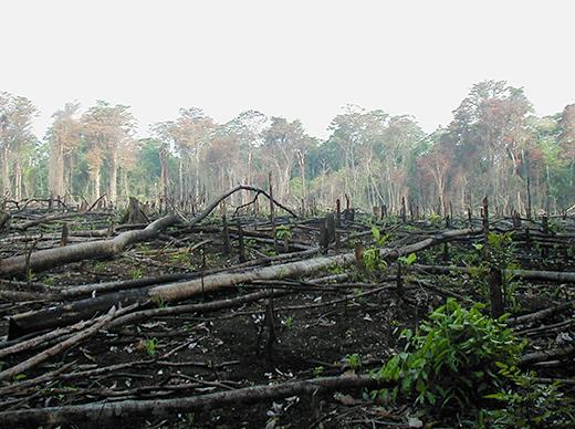 2014-09-17-deforestation_520px.jpg