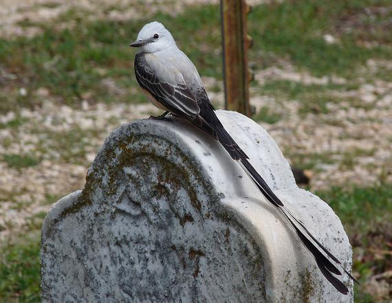 2014-09-19-gravestone.jpg