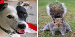 2014-09-21-Lilyvs.squirrel.jpg