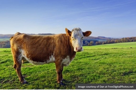 2014-09-25-cow2.jpg