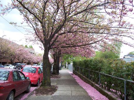 2014-09-25-uptown_pinktrees.jpg