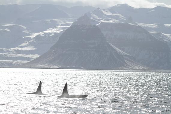 2014-09-26-Orcas.jpg