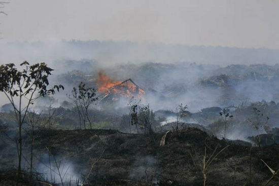deforestation in indonesia and brazil essay Here is your short essay on deforestation including indonesia, thailand, malaysia atlantic coast of brazil has lost 90-95 per cent of its mata atlantica.