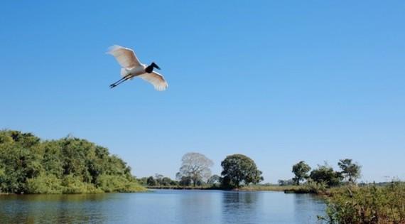 2014-09-28-pantanaleyecatch672x372.jpg