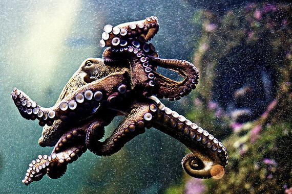 2014-09-29-octopus_78465465466464.jpg