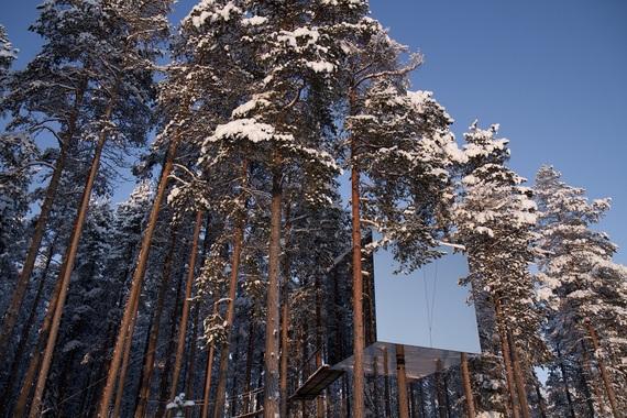 2014-09-30-tree1.jpg