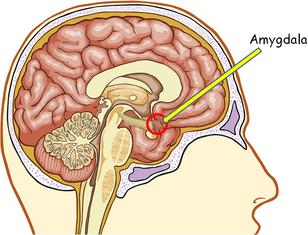 2014-10-01-amygdala.png