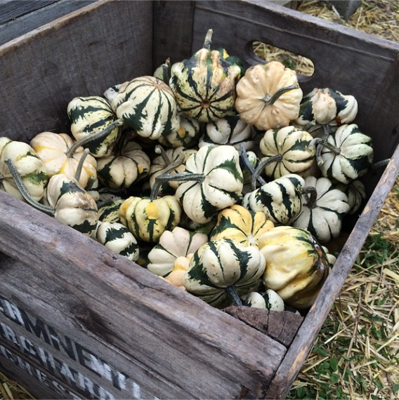 2014-10-01-gourdsx2.png