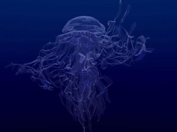 2014-10-02-agua_viva_901c078e29a8ca3e0cf070ddc2b597c7_01277.jpg