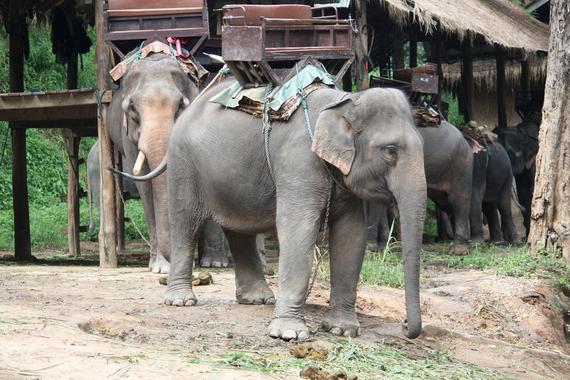 2014-10-03-ElephantsonwaytotourridescWorldAnimalProtection.jpg