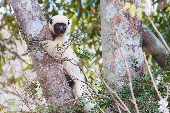 2014-10-03-MadagascarExpeditionTravisLemur.jpg