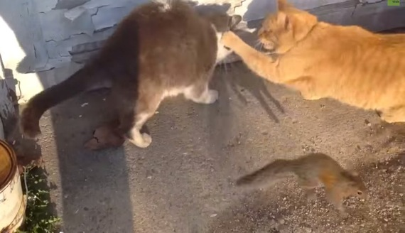 catswithsquirrel01