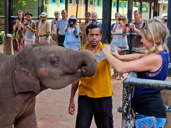 2014-10-04-ElephantOrphanageFeeding.jpg