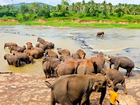2014-10-04-Elephants.jpg