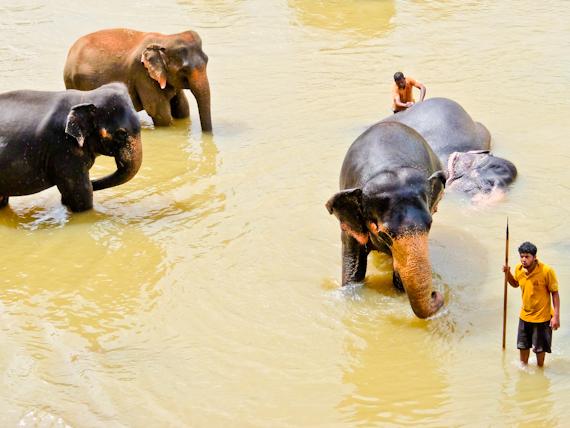 2014-10-04-ElephantsBathing.jpg
