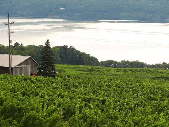 Wine Tasting in the Finger Lakes: 7 Must-Visit Artisanal Wineries ...