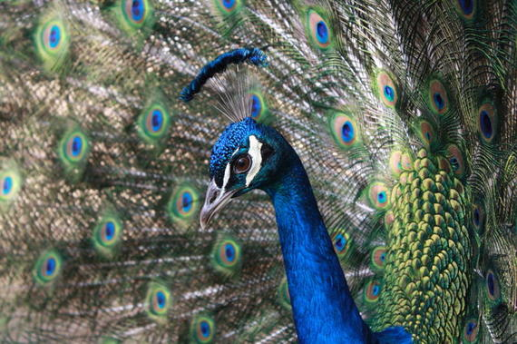 2014-10-05-Jewel_and_feathers.jpg