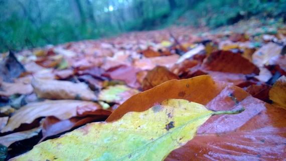 2014-10-07-AutumnleavesatByrlipwoods.jpg