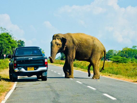 2014-10-07-Elephant.jpg