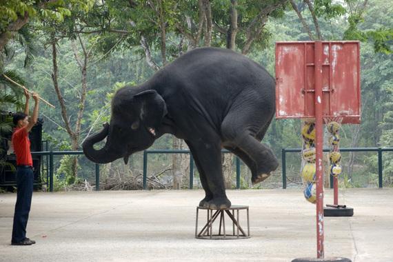 2014-10-08-Elephant_WorldAnimalProtection.jpg