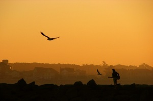 2014-10-08-bird.jpg
