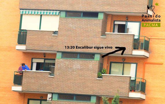2014-10-09-PACMA2.jpg