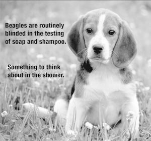 2014-10-09-beagles.jpg