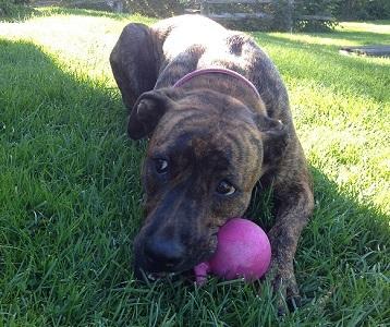 2014-10-10-Lucy2.jpg