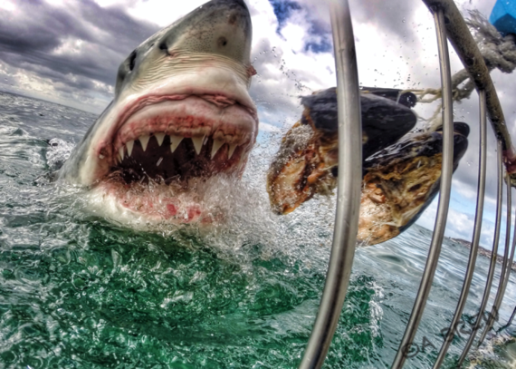 2014-10-11-sharkAmandaBrewer.png