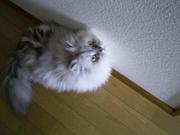 2014-10-12-nakumo_mini.jpg