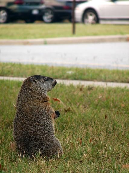 2014-10-14-groundhog.jpg
