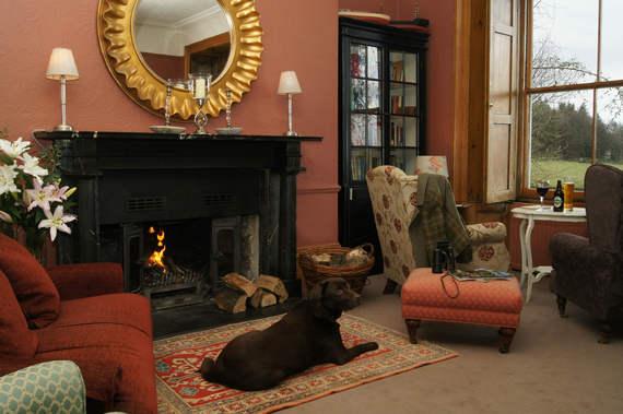 2014-10-14-princehalldogroom.jpg