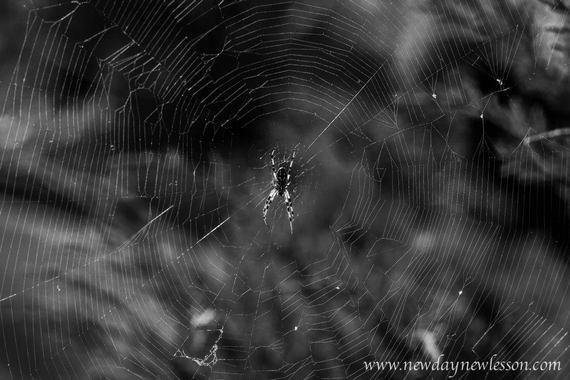 2014-10-15-spiderinweb.jpg