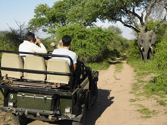 2014-10-16-KrugerNationalParkshutterstock_145434493.jpg