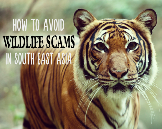 2014-10-19-wildlifescams.jpg