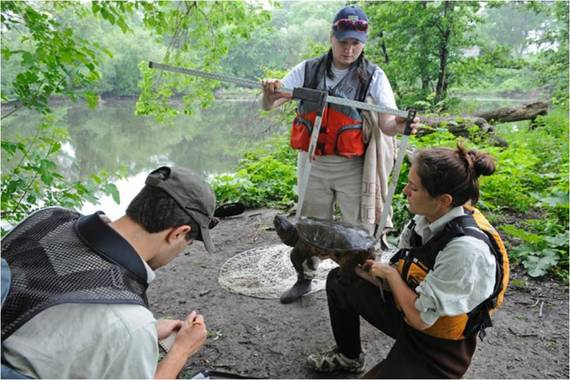 2014-10-22-JLMBronxRiverturtlesurvey.jpg