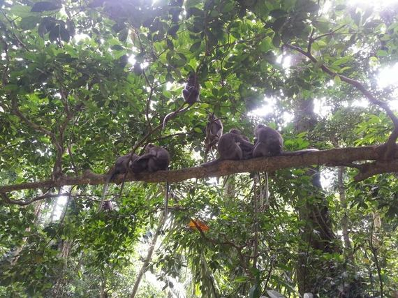 2014-10-23-monkey3.jpg