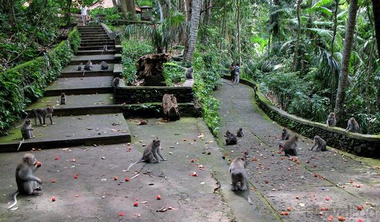 2014-10-23-monkeykingdom.jpg