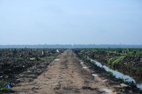 2014-10-24-Riau_palm_oil_2007.jpg