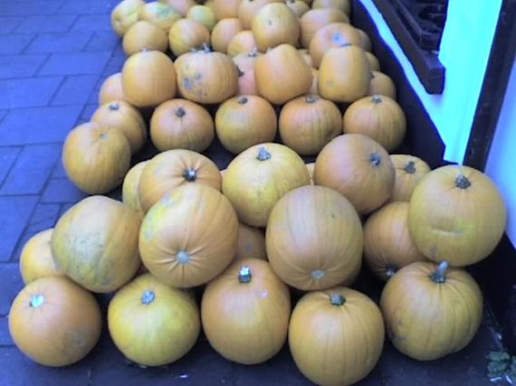 2014-10-25-pumpkins.JPG