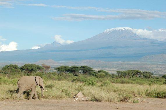 2014-10-27-KilimanjaroElephant.jpg
