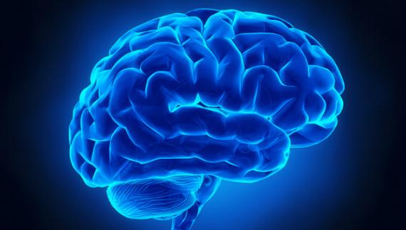 2014-10-27-brain.jpg
