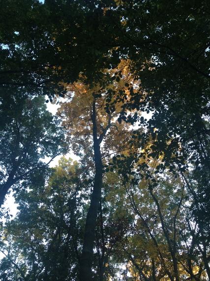 2014-10-28-IMG_0434.jpg